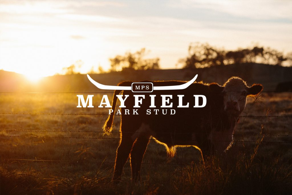 Mayfield Park Stud Branding - Photo Credit: Louis Blythe