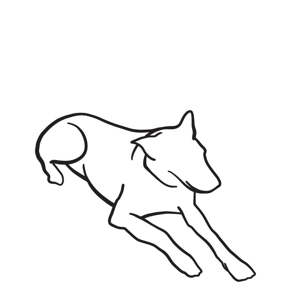 The Dog Mum Illustrations